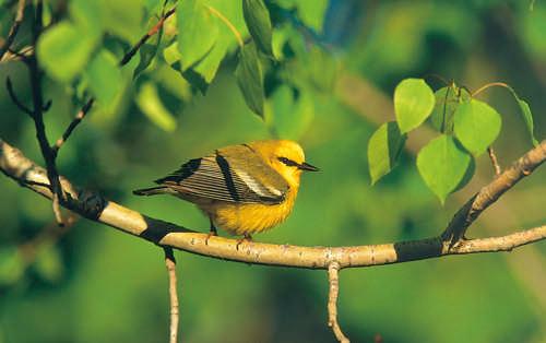 Variedades y tipos de semillas de aves silvestres - AskMax.CountryMax.com
