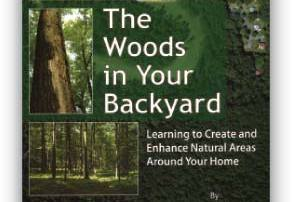the_woods_in_your_backyard