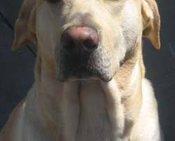 marley-the-dog-2