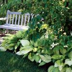 bench_in_the_garden