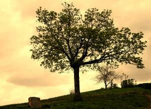 1386468_tree_2