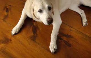buddy-flooring