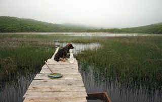 webdogfishing