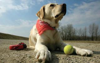 webdogtennisball