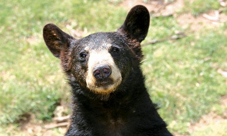 bear ranch